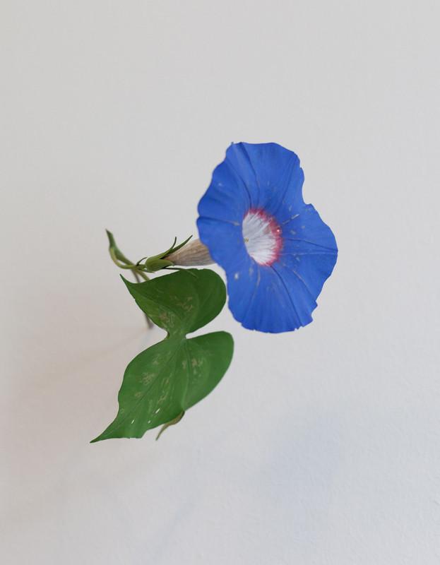 Morning Glory 2011, pintado en madera azul 14 x 12 x 17 cm