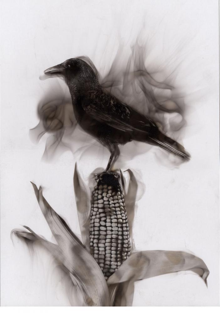 Monoculture, 2014 - Steven Spazuk