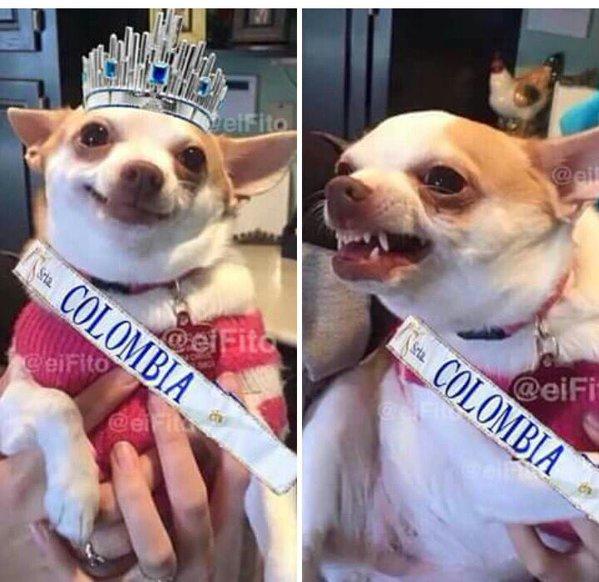 Meme sobre la polémica en Miss Universo 2015