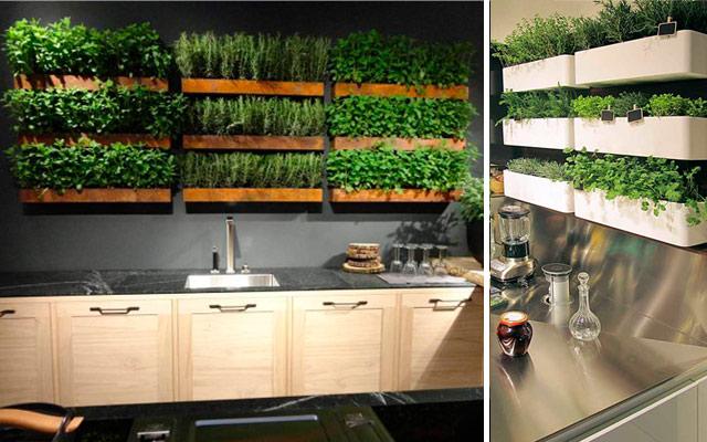 31 ideas creativas con plantas para tu cocina malatinta for Plantas beneficiosas para el huerto