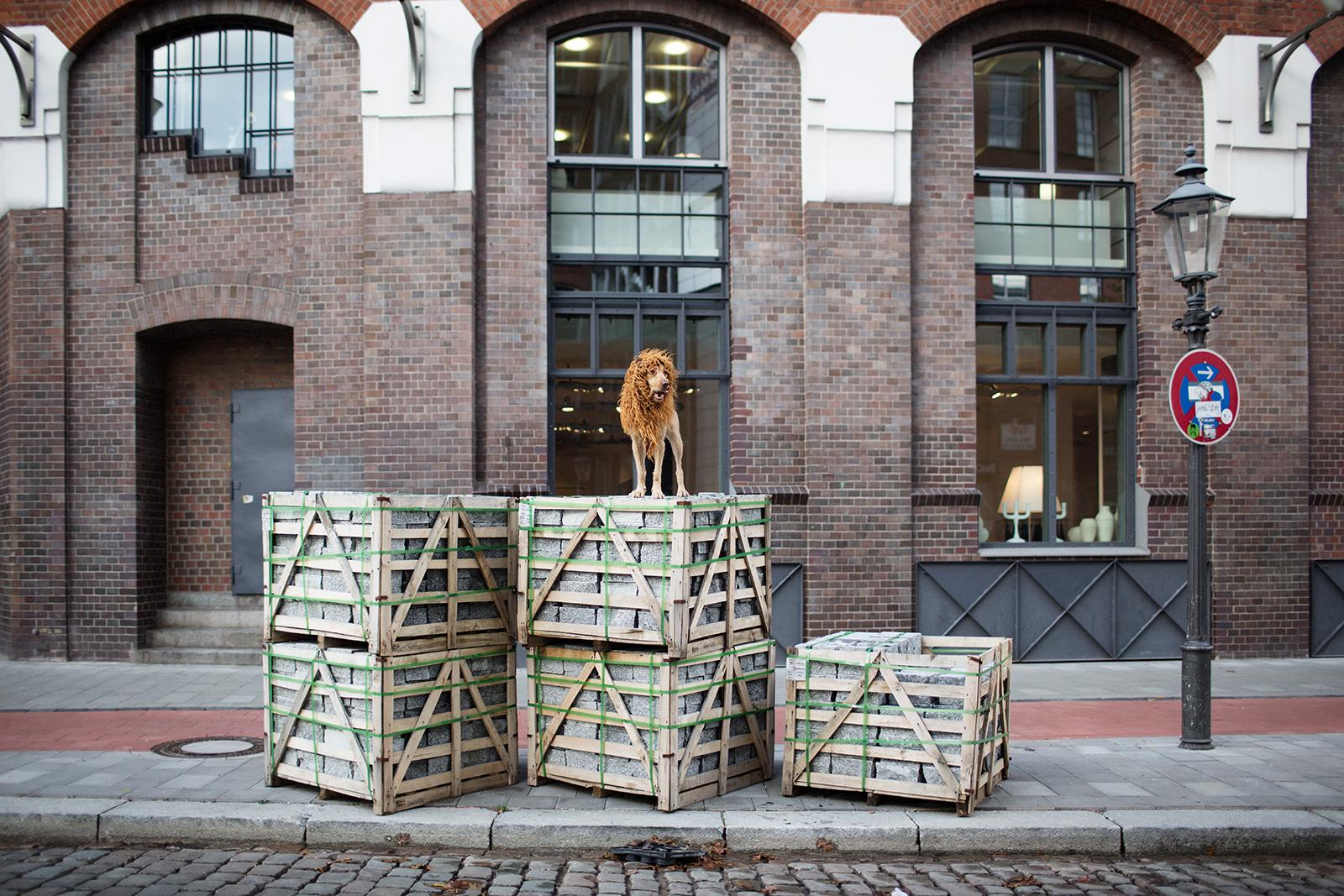 'El León de la Gran Ciudad' ('Grossstadtlowe') - Julia Marie Werner