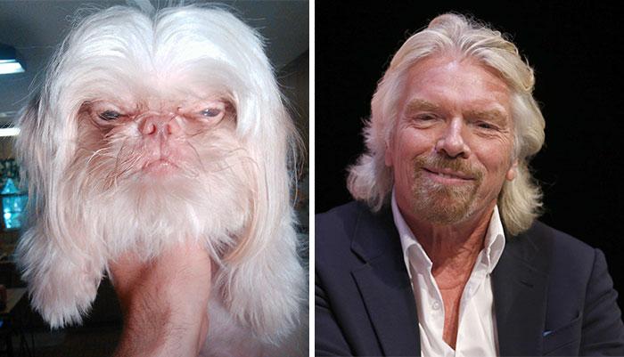 celebrity-look-alikes-animals-42__700