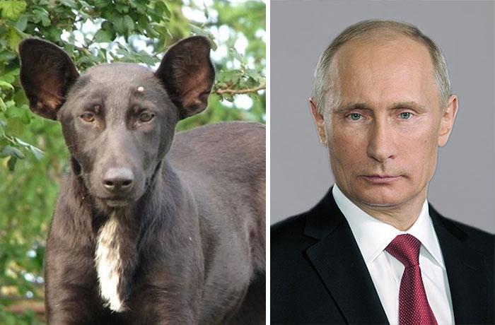 celebrity-look-alikes-animals-43__700