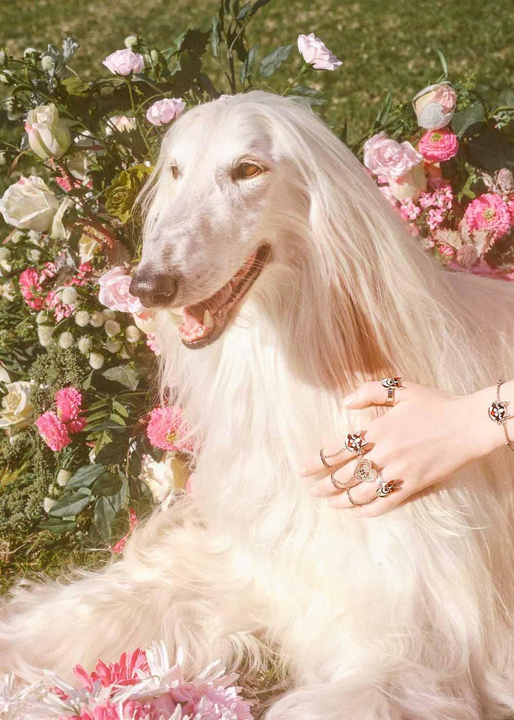 Gucci: el año de la suerte del perro